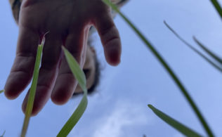 hand reaching towards grass of lawn